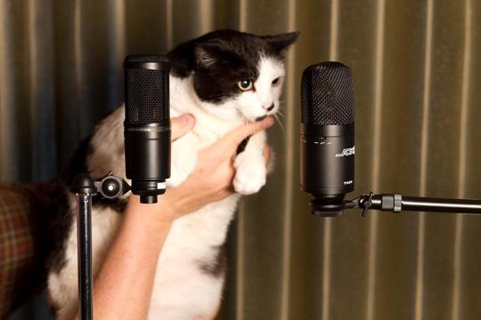 microfonos de condensador para grabar en estudio